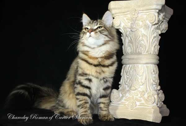 Charodey Roman of Cartier
